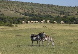 Kichwa Tembo Tented Camp Photo