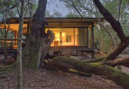 &Byond Phinda Forest Lodge